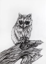 7-baby-raccoon