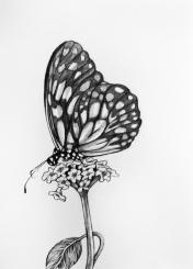 8-butterfly-on-flowers